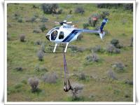 images/template/heli/Bushveldgamecapture_helicopterErindi_Auction_capture_2_028-010.jpg